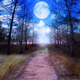 Full Moon And Woods. Digital Painting vector illustration