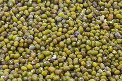 Full Mung Bean Royalty Free Stock Photography