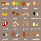 Full nuts and seeds icon set Stock Image