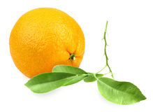 Orange and branch with green leaf Royalty Free Stock Image