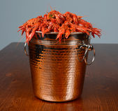 Full pail on boiled crayfishes Royalty Free Stock Images