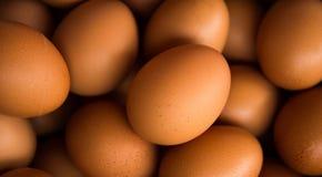Full ram för ägg - som är användbar för bakgrunder royaltyfri fotografi