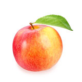 Single a red-yellow apple stock images