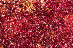 Full red background lettuce salad Royalty Free Stock Photos