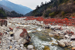 Full of red stone valley. This is a growth of algae in the red stone , at kangding Royalty Free Stock Photography