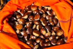 Free Full Rucksack Of Ripe Chestnuts Royalty Free Stock Images - 173681819