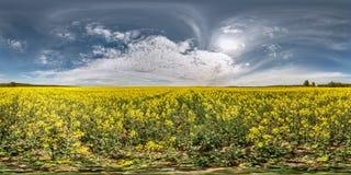 Full sömlös sfärisk panorama 360 grader vinkelsikt i n en fält rapseed canolarapsfrö i equirectangular projektion i soligt arkivfoton