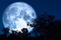 Free Full Sap Moon Back On Silhouette Plant And Trees On Night Sky Royalty Free Stock Image - 144974156