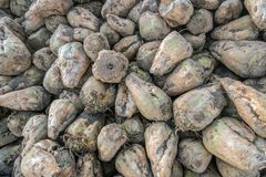 Harvested sugar beets from up close royalty free stock photos