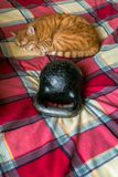 Red cat, sleeping near the standard 24-kg cast iron kettlebell. Full of serenity the cute red cat likes to curl up and doze on the checkered coverlet. He doesn` royalty free stock image