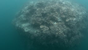 Coral reef under water. A full shot of a coral reef. Shot pans to the right and gets closer to the coral reef stock footage