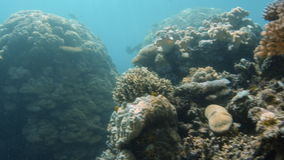 Different kinds of coral reef underwater. A full shot of different coral reefs. Shot pans to the right stock video