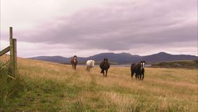Horses and a grassy field. A full shot of a horse on a green grass field stock footage