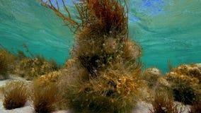Underwater leaf shot. A full shot of underwater leaf with seaweed stock video footage