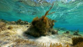 Underwater leaf shot. A full shot of underwater leaf with seaweed stock video