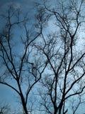 Full Silhouette Dry tree Stock Photos