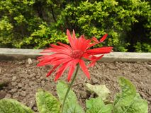 Full flower. Full size picture of flower royalty free stock photography