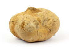 Full sized jicama Stock Photos