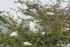full snöig tree för egrets Arkivfoto