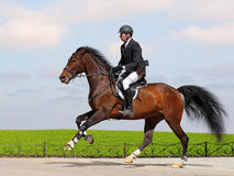 Full speed gallop. A rider in a show jumping running at full speed Royalty Free Stock Photo