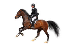 Full speed gallop. A rider in a show jumping running at full speed - isolated on white Stock Photo