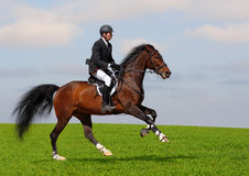 Full speed gallop. A rider in a show jumping running at full speed Stock Image