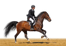 Full speed gallop. A rider in a show jumping running at full speed - isolated on white Royalty Free Stock Photography