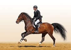 Full speed gallop. A rider in a show jumping running at full speed Stock Photos