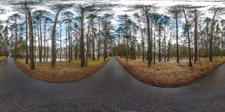 Full spherical hdri panorama 360 degrees angle view on asphalt pedestrian footpath and bicycle lane path in pinery forest in stock photos