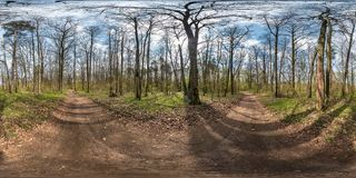 Full spherical hdri panorama 360 degrees angle view on gravel pedestrian footpath and bicycle lane path in pinery forest near huge royalty free stock photography