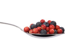 Full spoon of blueberries and cranberries Stock Photo