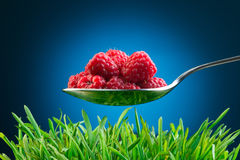 Full spoon of fresh raspberries Royalty Free Stock Photo