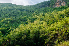 Full of Tree on the mountain. The mountain around dam in thailand. Many green tree at here royalty free stock photography