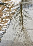 Full Tree Rippling Reflection royalty free stock photos