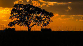 Full Tree Sunset Royalty Free Stock Photos