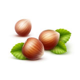 Full Unpeeled Realistic Hazelnuts with Leaves Close up Isolated on White Background Stock Photography