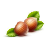 Full Unpeeled Realistic Hazelnuts with Leaves Close up Isolated on White Background Stock Images