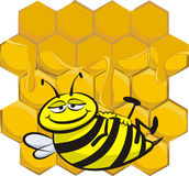 Full up bee Stock Images