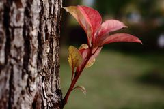 Full of vigour. A red sapling grows out of the trunk, symbolizing a new life Stock Photo