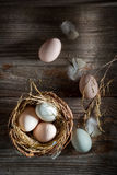 Full of vitamins free range eggs from the henhouse Royalty Free Stock Photography