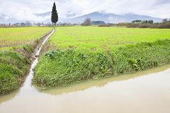 Full water ditch in a field after torrential rain Royalty Free Stock Photography