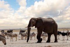 Full waterhole with Elephants Stock Photo