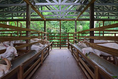 Full wide view of goat farm barn surrounded with green trees Royalty Free Stock Images