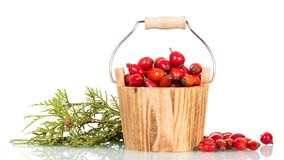 Full wooden bucket briar, next to green twig  on white Stock Image