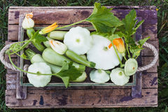 Full wooden tray of courgettes and squashes Stock Image