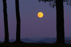 Full yellow moon on forest. Full yellow moon on the forest Stock Photo