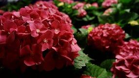 Fulla blom Arkivfoton
