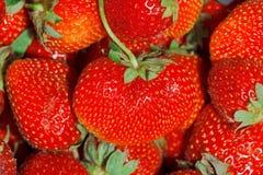 fulla jordgubbar för bakgrundsram Royaltyfri Fotografi