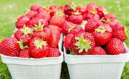 Fulla packar med nya jordgubbar med gräsbakgrund Royaltyfri Bild