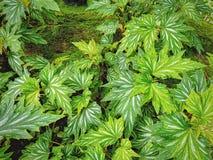 Fulla ramgräsplansidor i trädgården Royaltyfri Fotografi